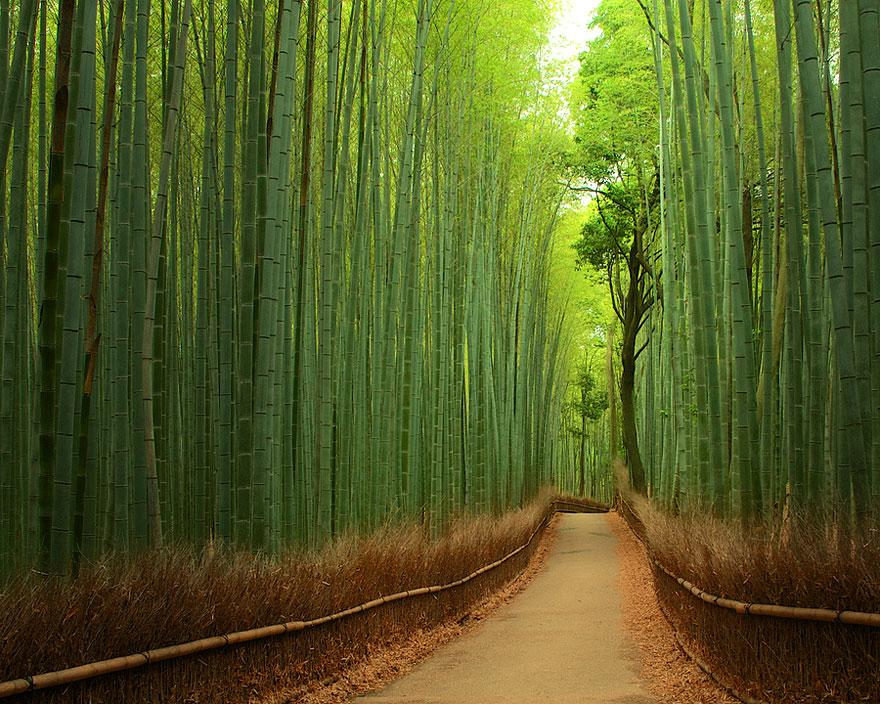 Las bambusowy (Chiny)