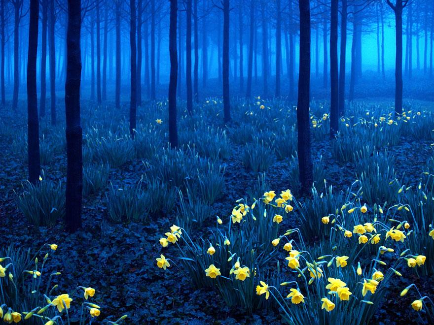 Schwarzwald (Niemcy)