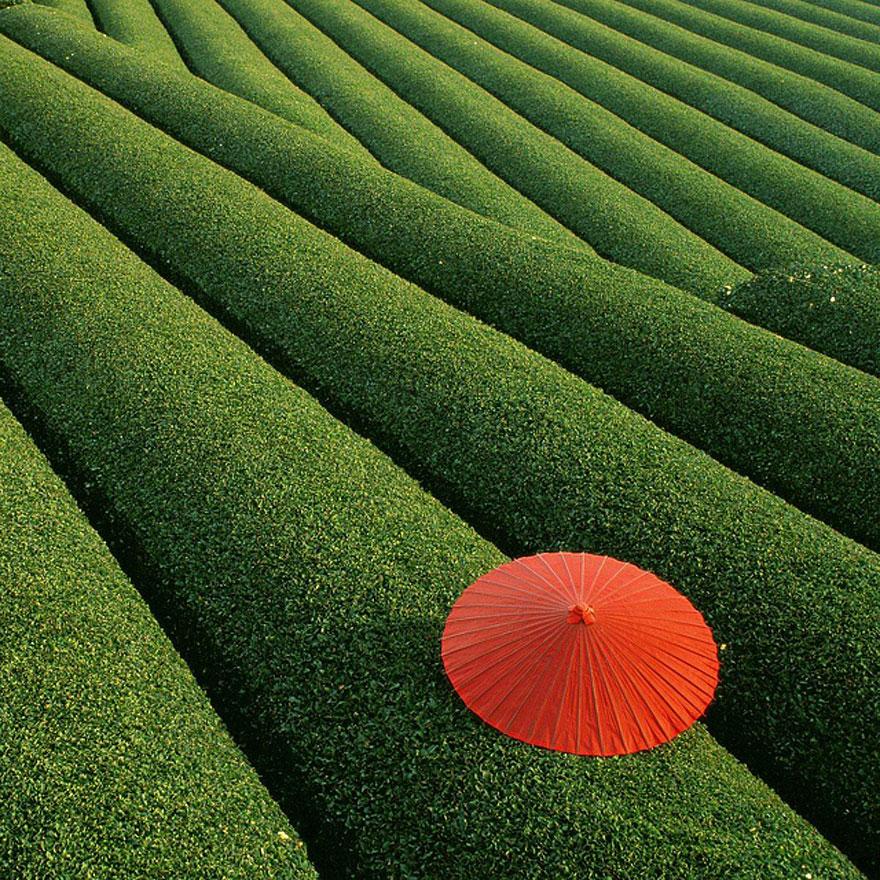Pola herbaciane (Chiny)
