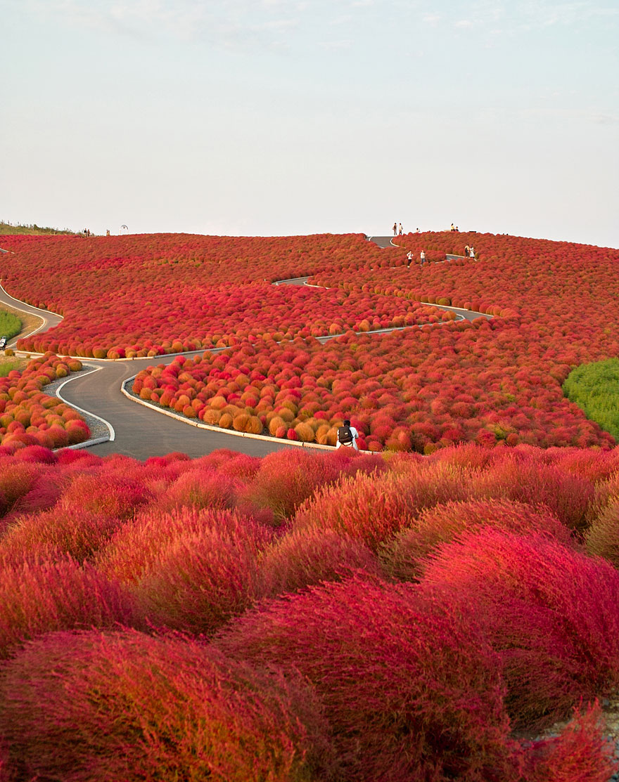 Hitachi Seaside Park (Japonia)