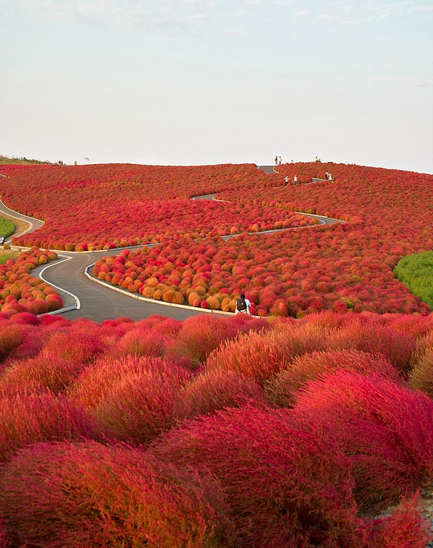 Hitachi Seaside Park (Japonia)
