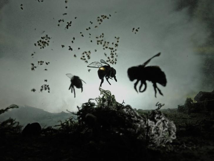 Proto_Bees