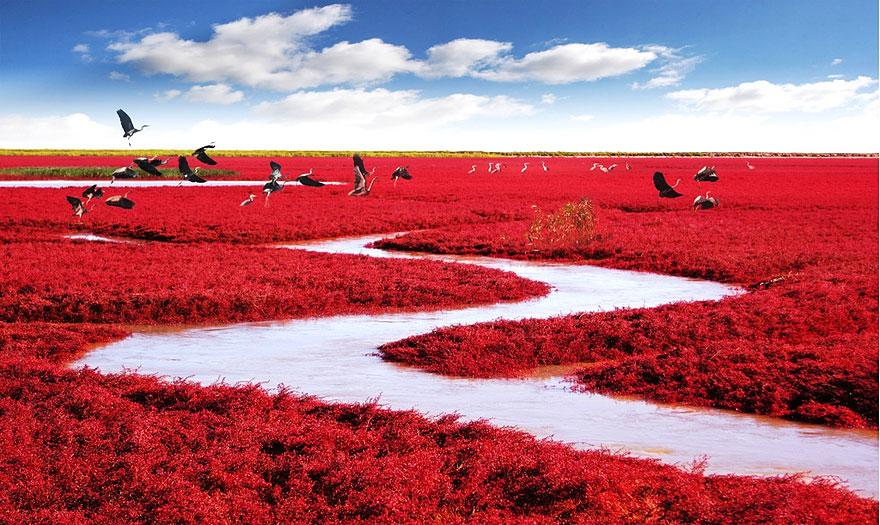 Czerwona Plaża (Chiny)