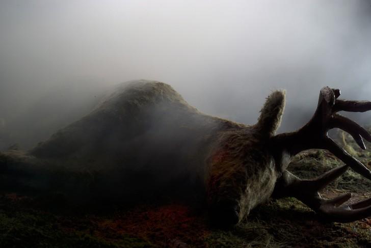 dead_deer