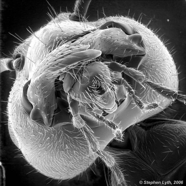 Mrówka / Zdjęcie: Stephen Lyth