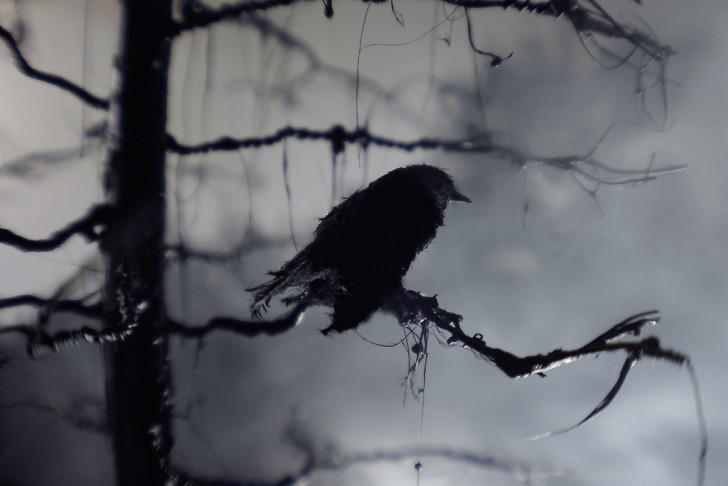 raven_watching_night_car
