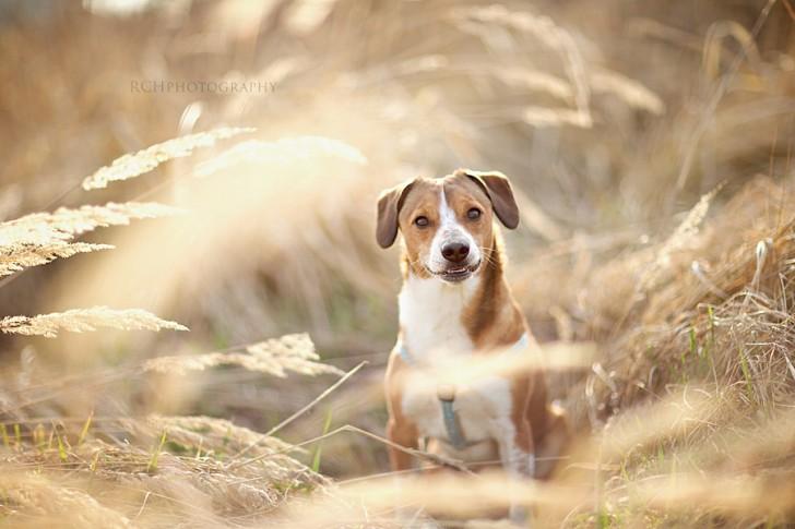 Laughing dog - Robert Chrenka