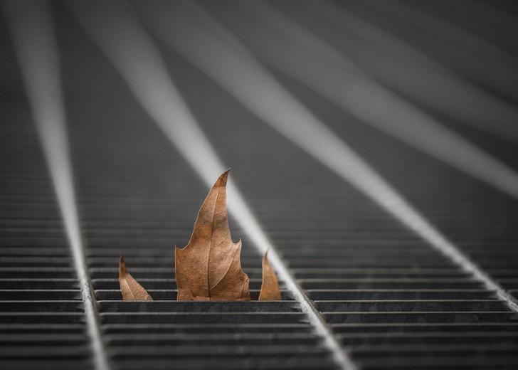 Autumnal Farewell - Darragh Hehir