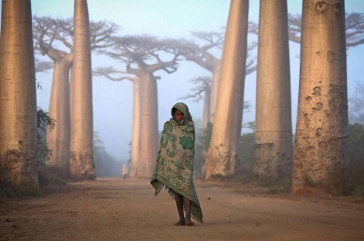 Dziewczyna z Madagaskaru pośród drzew