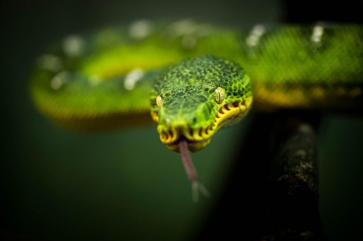 Slither - Justin Lo