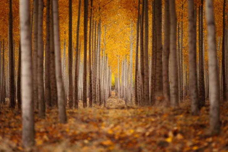 The Path - Joe Azure