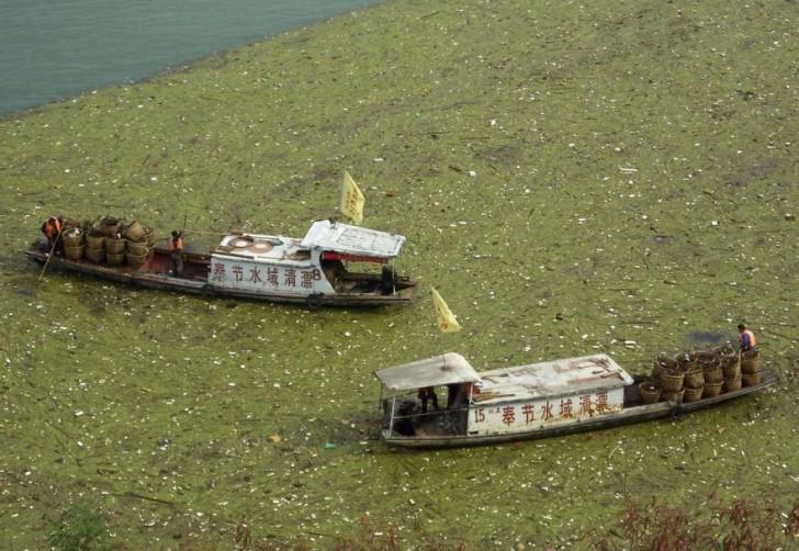 Robotnicy uprzątają zanieczyszczenia na rzece Jangcy.