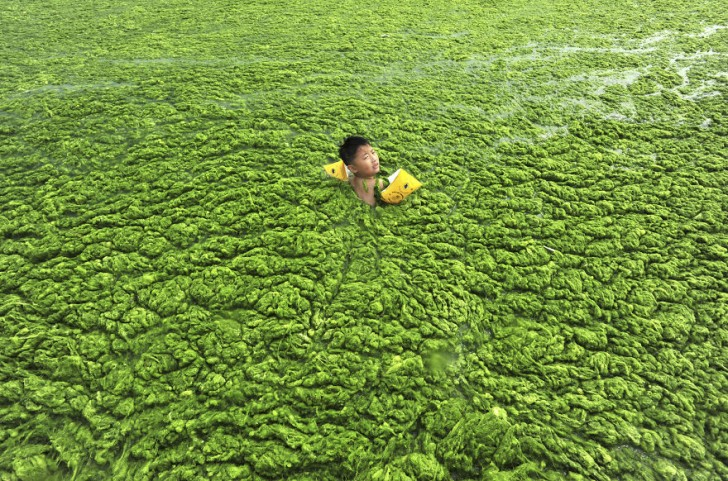 Chłopiec płynie przez wypełnioną glonami wodę. Quingdao, Shandong.