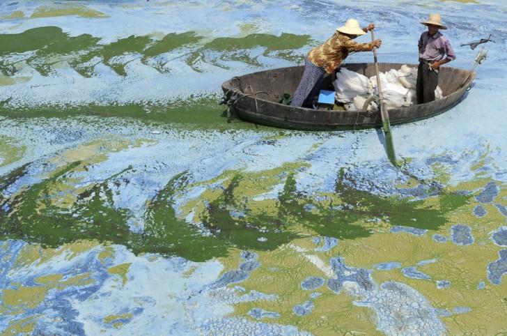 Rybak płynie przez, zanieczyszczone glonami, jezioro Chaohu. Hefei, prowincja Anhui.