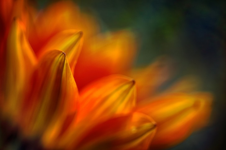 Shades of Orange - Ursula Abresch