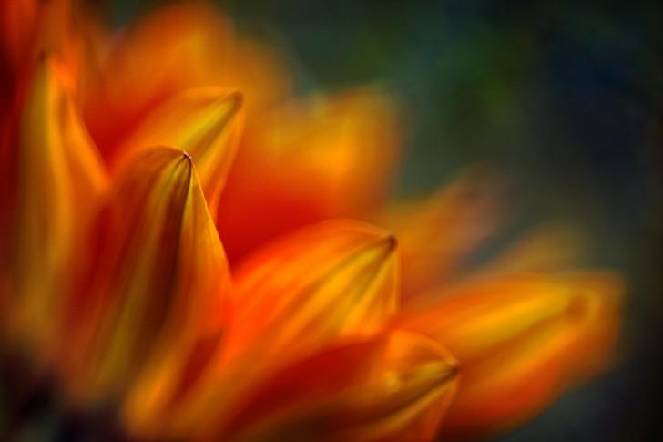 Shades of Orange - Ursula Abresch