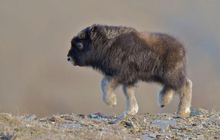 Przegląd małych, bardziej egzotycznych zwierząt