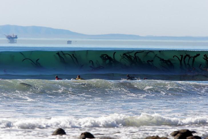 Macki Cthulhu sięgające po surferów, czy też po prostu glony?