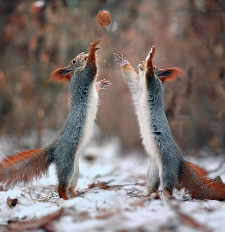 squirrel-photography-russia-vadim-trunov-11