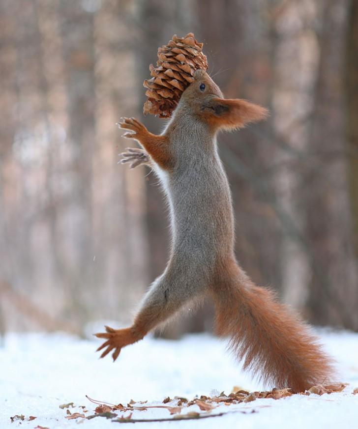 squirrel-photography-russia-vadim-trunov-14