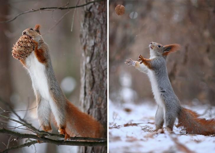 squirrel-photography-russia-vadim-trunov-15