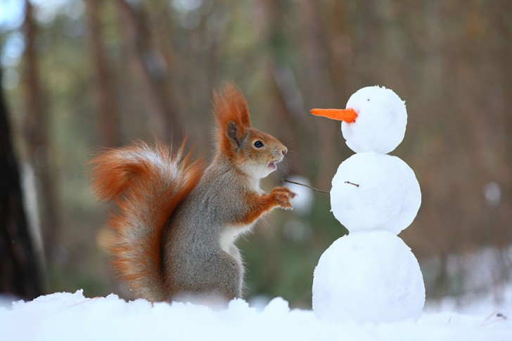 squirrel-photography-russia-vadim-trunov-3
