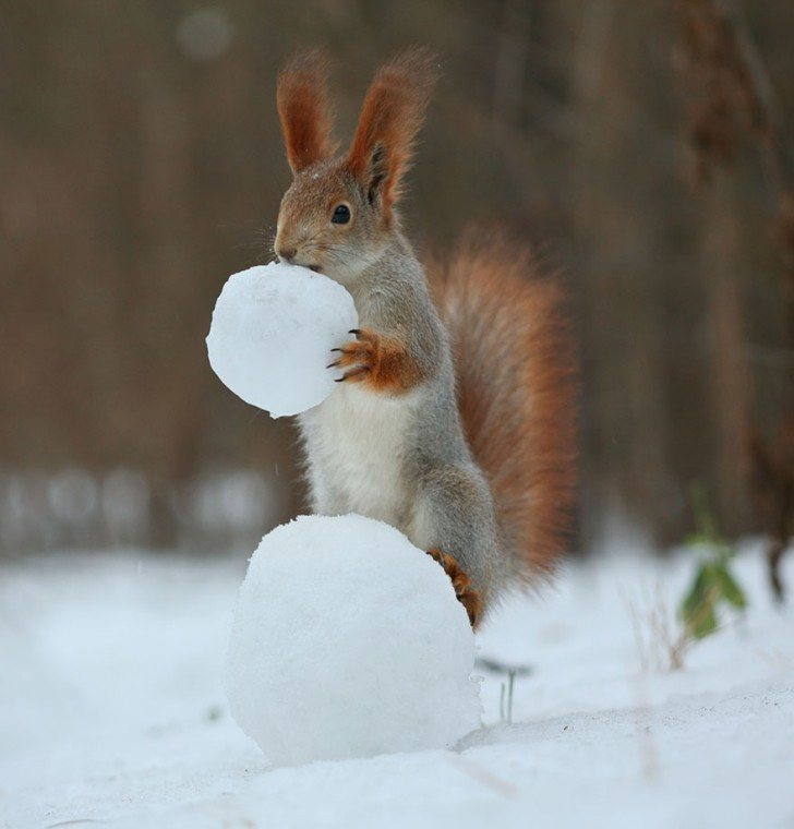 squirrel-photography-russia-vadim-trunov-4