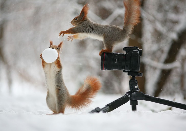squirrel-photography-russia-vadim-trunov-6