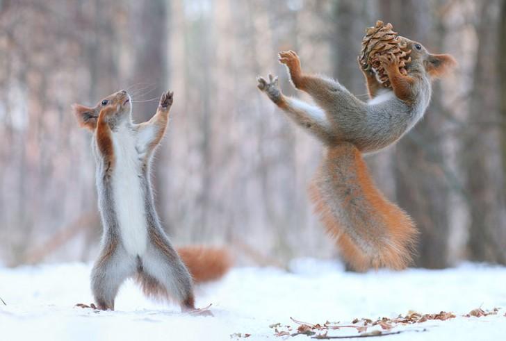 squirrel-photography-russia-vadim-trunov-8