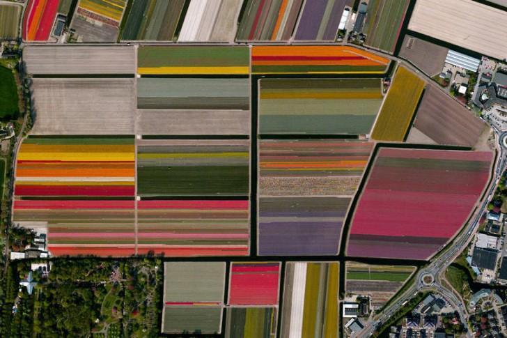 Pola tulipanów, Lisse, Holandia