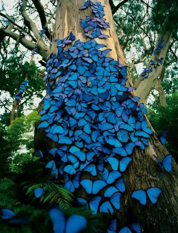 Motyle udające kwiaty