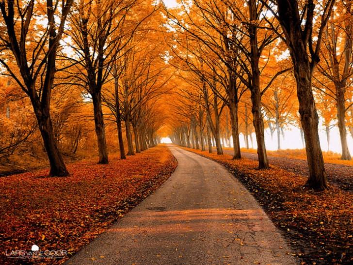 Jesienna ścieżka