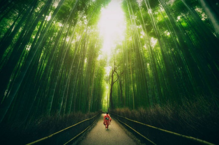 Bambusowy las, Kyoto, Japonia