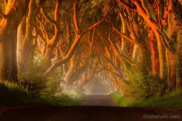 The Dark Hedges, Irlandia Północna