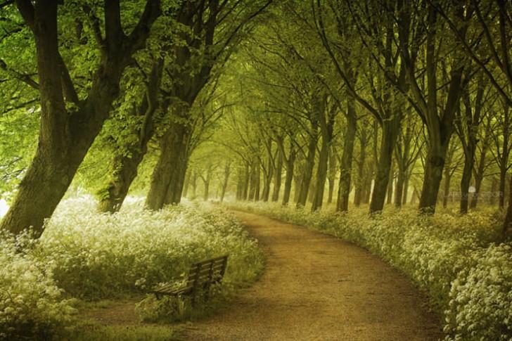 Wiosna w Holandii
