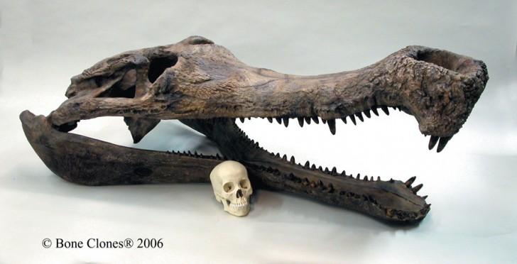 sarcosuchus-cherep