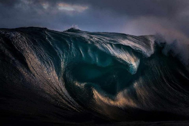 © Ray Collins / Natural World