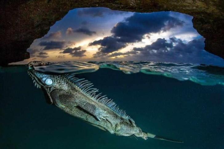 © Lorenzo Mittiga / Natural World