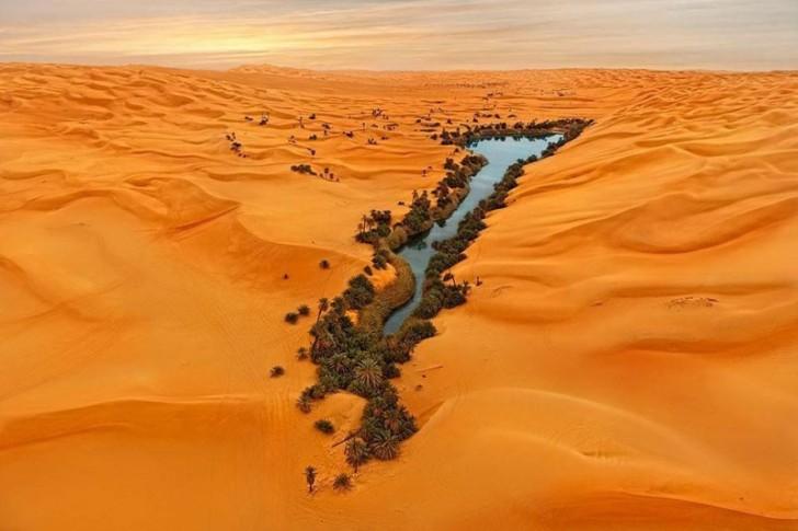 Oaza na pustyni Namib