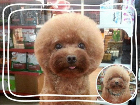 square-dog4