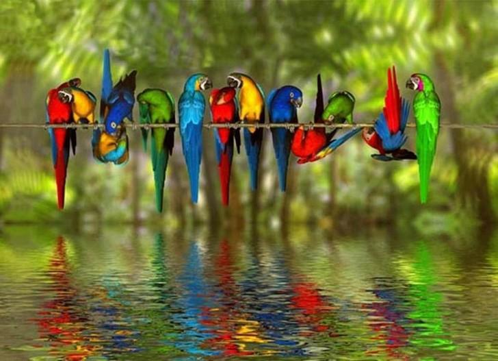 Znaczenie i symbolika ptaków w różnych kulturach