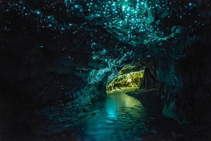 Jaskinia Waitomo Glowworm, Nowa Zelandia