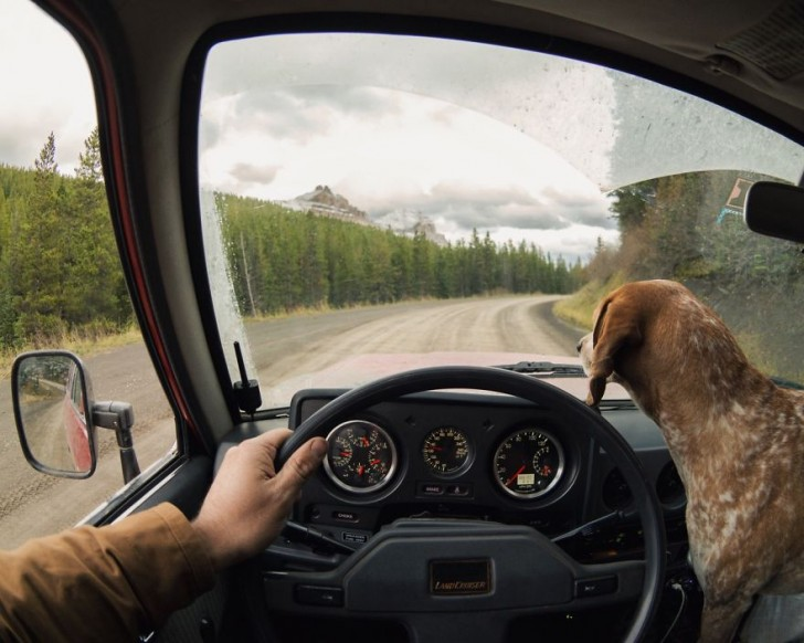 dog-traveling-car-motorcycle-maddie-on-road-11