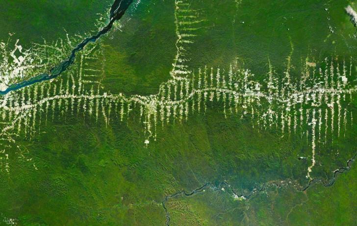 Wycinka lasów w Amazonii