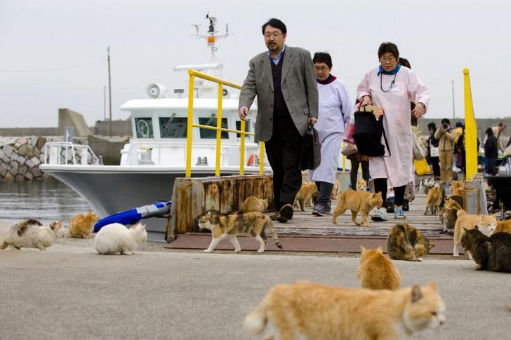 Koty otaczające ludzi schodzących z pokładu promu w porcie Aoshima