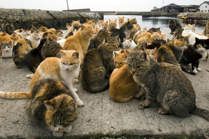 Tłum zwierząt w porcie