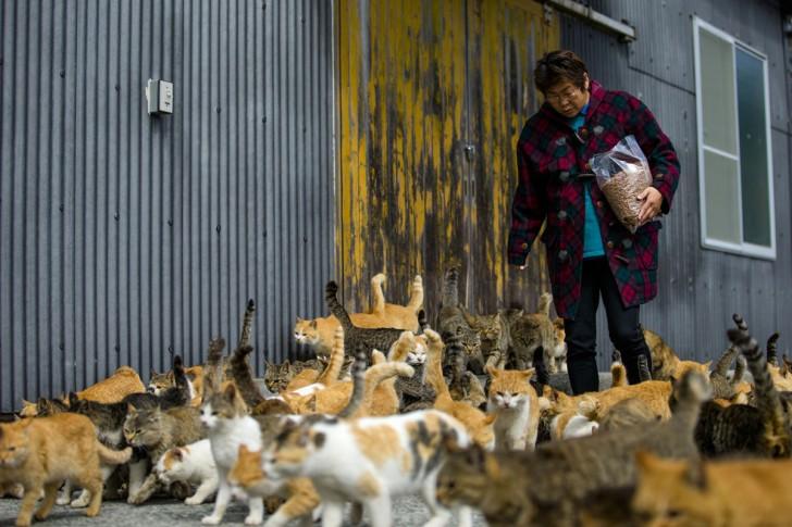 Zwierzęta zgromadzone wokół kobiety niosącej im pożywienie do specjalnie wyznaczonego w tym celu miejsca na wyspie