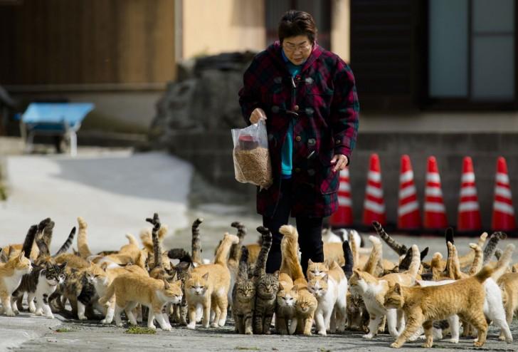 Zwierzęta zgromadzone wokół kobiety niosącej im pożywienie do wyznaczonego miejsca