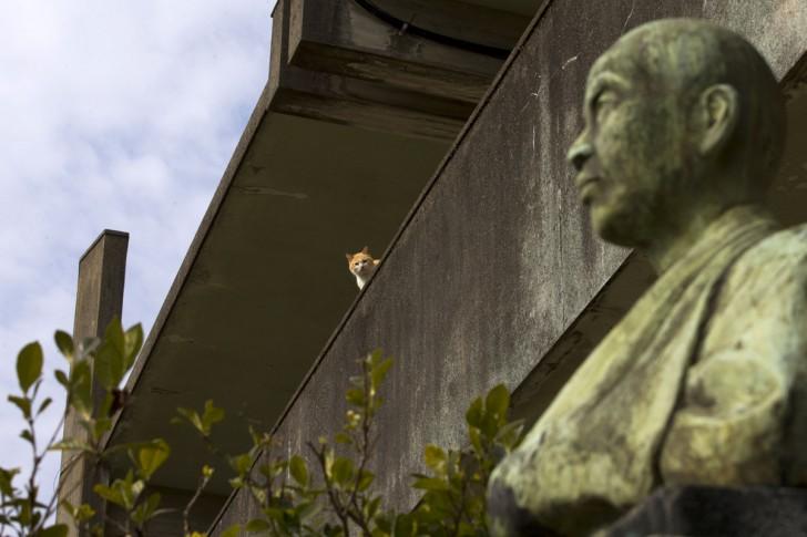 Kot siedzący na dachu opuszczonego budynku szkoły