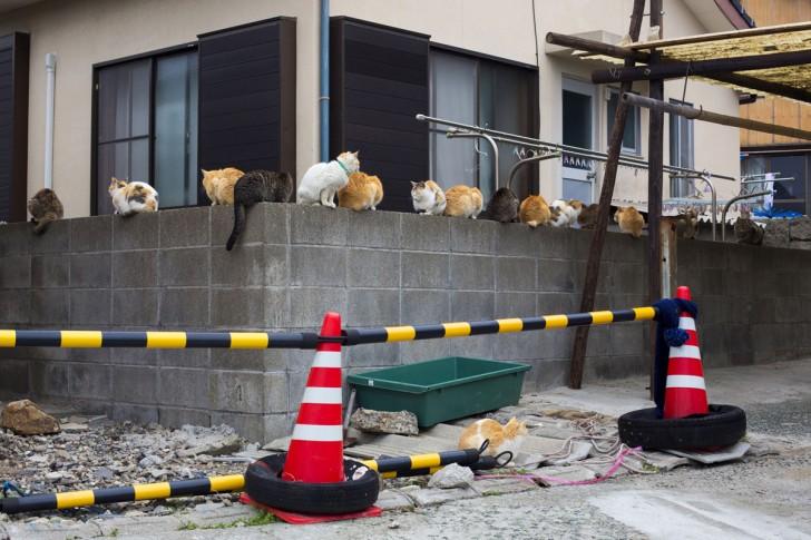 Zwierzęta na murze
